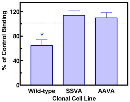 Effect of 24 h treatment with norepinephrine on binding of [3H]rauwolscine. Cell were incubated with 0.3 μM norepinephrine or vehicle for 24 h and membranes prepared. Specific binding to the alpha-2C adrenergic receptor was determined using 0.40 nM [3H]rauwolscine. The values are mean ± SEM for 7 experiments using two different clones. Each experiment consisted of three culture dishes with norepinephrine and three without norepinephrine for each clone and each dish was assayed in duplicate. The amount of specific binding in the wild-type following the norepinephrine pretreatment was significantly different from the binding in the control by a t-test (p < 0.05). The binding levels of the two mutant clones were not different following norepinephrine pretreatment as compared to control.
