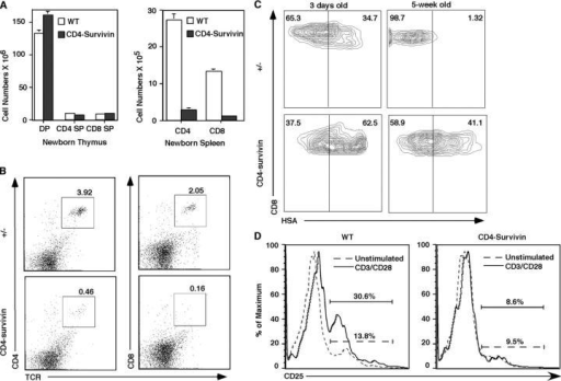 Reduced number of peripheral T cells in young mice and their elevated HSA level. (A) The absolute cell numbers of DP, SP (CD4+ CD8− or CD8+ CD4−), thymocytes, and peripheral T cells in newborn CD4-survivin mice and the littermate controls (n = 5). (B) Representative flow cytometric profile of splenocytes from 0–1-wk-old CD4-survivin mice. The experiments have been repeated at least three times with similar findings. (C) CD8 versus HSA flow cytometric profile of peripheral T cells from CD4-survivin and control littermates. (D) Impaired CD25 activation marker in CD4-survivin peripheral T cells. Splenic cells from CD4-survivin mice and their littermate controls (WT) were stimulated with anti-CD3/CD28 antibodies for 18 h and stained with anti-CD4 and anti-CD25 antibodies. The CD4+ gated cell profiles are shown here.