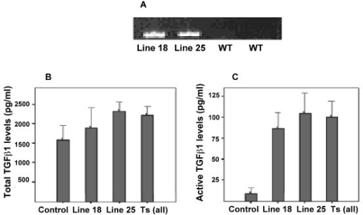 Characterisation of TGFβ1 transgenic mice. A. Expression of the transgene in wild type and both line 18 and line 25 transgenic mice was assessed by PCR using TGFβ1 sequence specific primers. This figure is a representative agarose gel post amplification indicating expression of the TGFβ1 transgene in both line 18 and line 25 Tr+ transgenic mice (Lanes 1 and 2). Lanes 3 and 4 show absence of transgene in wild type mice. Figure B and C show PAIL lumineriferase assay results. To determine the effect of the transgene on circulating TGFβ1, both total (B) and active (C) TGFβ1 concentrations in sera was determined.