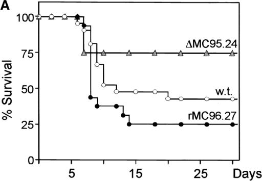 Reduced virulence and replication capacity of the m152 deletion mutant in vivo. (A) Newborn BALB/c mice were inoculated with 100 PFU i.p. of wild-type (w.t.) MCMV (○), ΔMC95.24 (filled gray triangles), or rMC96.27 (•) virus 12 h post partum, and their survival was monitored daily. (B) Newborn BALB/c mice were infected as shown in A, and virus titers were determined 8 d after infection. Data represent the mean value of at least five mice.