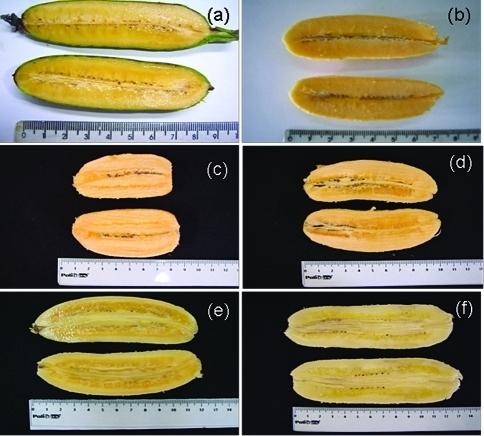 Iowa State University goes Bananas over GMOs | Food ...