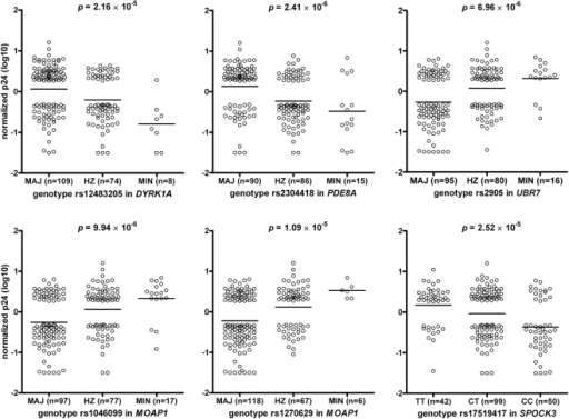 Association between HIV-1 replication in monocyte-derived macrophages (MDM) and the genotypes for the SNPs rs12483205 in DYRK1A, rs2304418 in PDE8A, rs2905 in UBR7, rs1046099 and rs1270629 in MOAP1, and rs17519417 in SPOCK3.Only donors with MDM with low (n = 95) or high (n = 96) HIV-1 replication in vitro were included in the genome-wide SNP analysis. This selection of donors with a more extreme phenotype explains the absence of circles in the middle section of the graphs. MAJ, homozygous for the major allele; HZ, heterozygote; MIN, homozygous for the minor allele.
