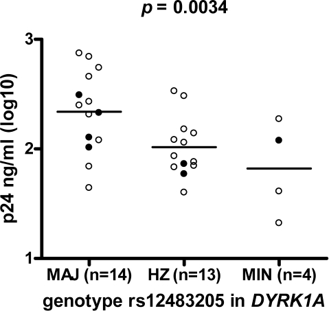 Significant association between rs12483205 and in vitro replication of HIV-1 in macrophages derived from an independent group of 31 healthy blood donors.The negative association between the rs12483205 minor allele and Gag p24 levels in MDM culture supernatant 14 days after inoculation with HIV-1, was found to match with the results from the genome-wide association study. Open circles represent results from donors with the CCR5 Δ32 wild-type genotype, filled circles from donors with the CCR5 wt/Δ32 heterozygous genotype. MAJ, homozygous for the major allele; HZ, heterozygote; MIN, homozygous for the minor allele.