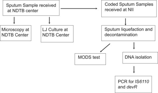 flow chart describing movement and processing of sputum