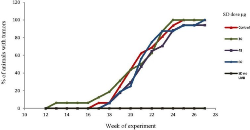 Effects of SD treatment on tumor incidence in SKH-1 mice. SD pre-treatment did not affect the incidence of tumors (n=20 per group). By the 13th week, one animal from the 30 μg/dose group developed one tumor. During the week 17th, animals from the control group started developing tumors, while tumors started appearing by the 18th week in the animals treated with 45 and 60 μg/dose. By the 25th week, the incidence for all groups ranged from 95% to 100%. The group treated with 60 μg/dose of SD and no UVB exposure, did not develop tumors at any time during the experiment.