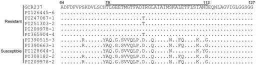 ToMV-L-resistant and -susceptible S. habrochaites have distinct amino acid sequences in the positively selected region of Tm-1.Deduced amino acid sequences of the Tm-1 protein of five ToMV-L-resistant and -susceptible S. habrochaites plants from the indicated accessions were aligned. The positively selected region (79–112) is indicated. Identical amino acid residues to those of Tm-1GCR237 are indicated by dots.