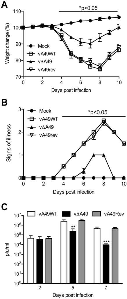 A49 is a virulence factor.Groups of 5 BALB/c mice were infected intranasally with 5×103 PFU of the indicated viruses and their weights (A) and signs of illness (B) were monitored daily. Weights are expressed as the percentage ± SEM of the mean weight of the same group of animals on day 0. Signs of illness (B) are expressed as the mean score ± SEM. (C) At day 2, 5 and 7 pi, lungs from infected animals were extracted and virus titres were assessed by plaque assay. Statistical significance is indicated by horizontal bars after analysis with one-way ANOVA with Friedman and Dunn's multiple comparison test (A), or unpaired t-test comparing WT with vΔA49 (B–C). Data correspond to one representative experiment out of two showing indistinguishable results.