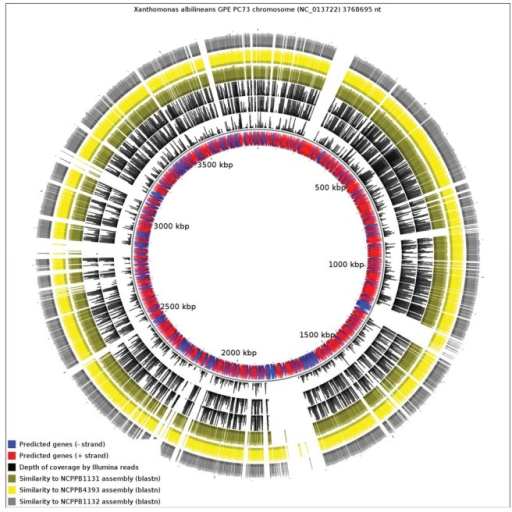 Alignment of the three Xanthomonas Group 1 new genome sequences against the chromosome of X. albilineans. The blue and red inner track represents annotated genes. The next three black tracks represent depth of coverage by Illumina sequence reads for NCPPB1131, NCPPB4393 and NCPPB1131 respectively. The four colored outer rings indicate sequence similarity to the genome assemblies of NCPPB1131 (olive), NCPPB4393 (yellow) and NCPPB1131 (grey) respectively.