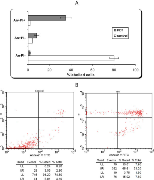 Apoptosis evaluation by flow-cytometry of DOK cell line subjected to PDT. A) Apoptosis evaluation for triplicates repeated in four identical experiments. Annexin V-FITC and PI (red) quantified early, late apoptosis and necrosis: An-Pi- viable cells; An + Pi- early apoptotic cells; An + Pi + late apoptotic/necrotic cells. Cell samples are from the same batches that were subjected post-irradiation to Protein microarray analysis. B) Example of flow cytometry registration of un-loaded (control) and loaded cells with AlS2Pc and subjected to PDT.