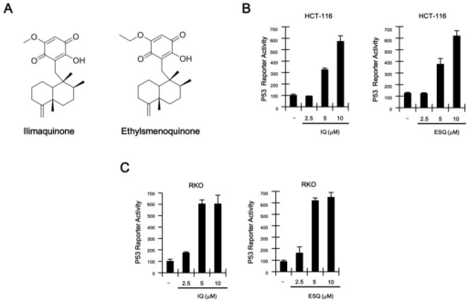 (A) Chemical structure of ilimaquinone (IQ) and ethylsmenoquinone (ESQ); (B,C) concentration-dependent activation of p53 response transcription by IQ and ESQ. HCT116-p53 FL and RKO-p53 FL reporter cells were incubated with the indicated concentrations of IQ and ESQ. After 15 h, firefly luciferase activity was determined. The results represent the average of three experiments. Bars indicate standard deviations.