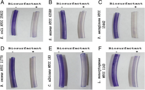 BS produced byE. faeciuminhibits biofilm formation of (A)E. coliATCC 25922 (B)S. aureusATCC 6358P (C)P. aeruginosaATCC 15442 (D)B. cereusATCC 11770 (E)C. albicansMTCC183 (F)L. monocytogenesMTCC1143 on silicone tubes, (-) without BS treatment (+) with BS coating at the concentration of 25 mg ml-1. Biofilm inhibition was visualized by staining with crystal violet.