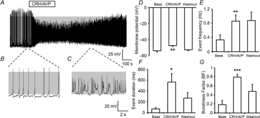 Stimulation of corticotrophs with CRH/AVPA, representative current-clamp recording of a corticotroph cell exposed to 0.2 nm CRH and 2 nm AVP for 3 min. Under basal conditions corticotroph cells display predominantly single-spike action potentials (B) which transition to complex bursting patterns following CRH/AVP exposure (C). Grey shading indicates membrane potential between −50 mV and +10 mV. Summary bar graphs illustrating that stimulation with CRH/AVP results in a membrane depolarisation (D) coupled with an increase in event frequency (E), event duration (F) and burstiness factor (BF; G). Data are means ± SEM, (n = 7 per group). *P < 0.05, **P < 0.01, ***P < 0.001, Student's t test compared to base values.