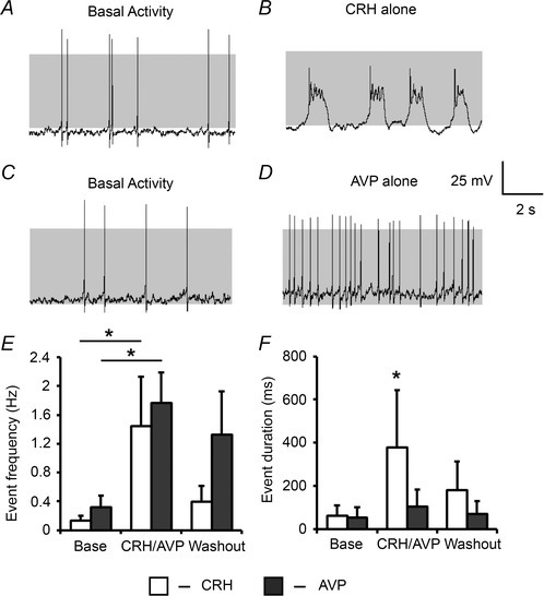 CRH and AVP differentially regulate corticotroph excitabilityRepresentative traces of corticotroph cells before (A) and following (B) 0.2 nm CRH alone or before (C) and after (D) exposure to 2 nm AVP for 3 min. Summary bar graphs reveal that individually CRH and AVP can both induce an increase in event frequency (E) but only CRH is able to produce an increase in event duration which corresponds to a transition to bursting behaviour (F). Data are means ± SEM (n > 3 per group). *P < 0.05 with ANOVA in E, and Mann–Whitney U test in F, compared to base values.