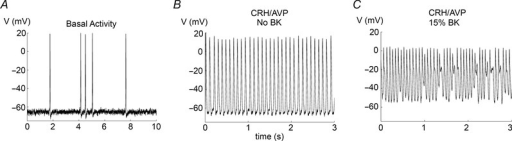 Simulations with little or no BK conductanceA, basal spiking activity in the absence of BK conductance. B, CRH/AVP increases spike frequency without bursting when there is no BK conductance. C, when some BK conductance remains, CRH/AVP elicits some bursting mixed with fast spiking.