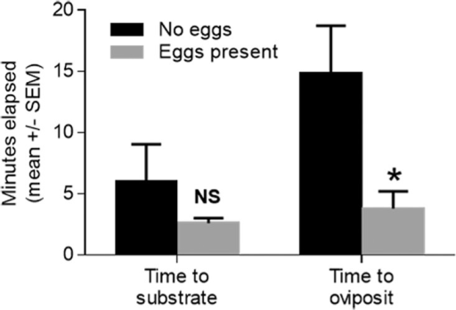 The behavioral responses of gravid S. vittatum to fresh conspecific eggs in the orientation double chamber assay.Assays were conducted in the presence or absence of fresh eggs, in the lower chamber, as described in Materials and Methods. Values that were significantly different from the control are indicated by an asterisk [*] (unpaired t-test, P < 0.05) and those which were not significantly different values are indicated by NS (P > 0.05).