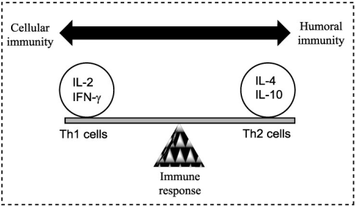 A model demonstrating the balance between Th1 (cell-mediated) and Th2 (humoral) response of the adaptive (specific) immune system; a balance is essential to prevent disease. Both Th1 and Th2 responses are tightly controlled but excessive activation may cause or alter the disease state. Cytokines are most commonly grouped by their functional similarities and one of the most prominent concepts used to discriminate two distinct ways that the specific immune system can react on environmental stimuli is the classification of Th1 and Th2 cell diversity. This classification is based on the cytokine production patterns of T helper cells and reflects the polarization of the immune system to either a cell-mediated (Thl) or a humoral (Th2) immune response [8].