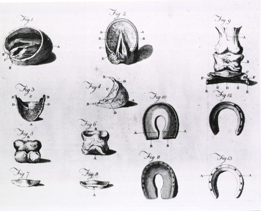 <p>Illustration of nine hoof problems and four types of horseshoes.</p>