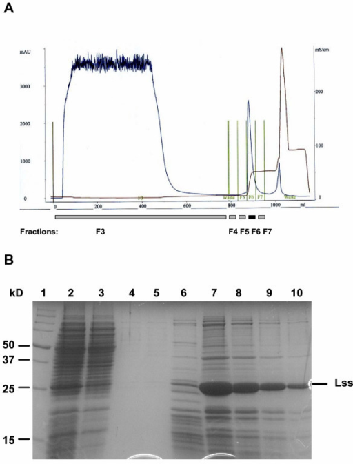 Purification of the overproduced lysostaphin. A, Typical chromatogram of a lysostaphin capture step. NaCl concentration (brown line) and absorption at 280 nm (blue line) are indicated. Fractions that were analysed by SDS-PAGE are indicated by grey bars underneath. The lysostaphin fraction (F6) is indicated with a black bar. B, SDS-PAGE analysis of the different fractions of the capture chromatography. 1, molecular weight marker; 2, cell extract before loading; 3, flow-through fraction (F3); 4, 5 and 6, fractions F4, F5 and F7; 7, lysostaphin fraction F6; 8, 9 and 10, fraction F6 diluted 1:2, 1:4 and 1:8.