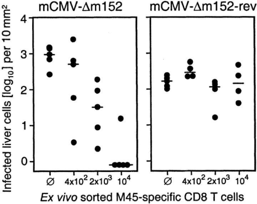 M45-specific memory cells maintain antiviral function but are unable to prevent productive infection by the priming virus genotype. M45-TCR+ CD8+ memory cells were purified by cell sorting from a pool of spleen cells derived from 15 C57BL/6 mice at 4 mo after infection with mCMV-WT. The antiviral function was tested by adoptive transfer into immunocompromised C57BL/6 recipients infected with mutant virus mCMV-Δm152 or revertant virus mCMV-Δm152-rev. ∅, no cell transfer. On day 11, virus replication in the liver was quantitated by immunohistological detection of IE1 protein in the nuclei of infected hepatocytes. Dot symbols represent data for individual recipients. Median values are marked.