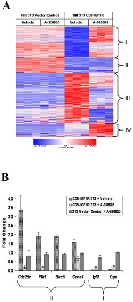 A composite transcription signature is induced by CD8-IGF1R over-expression and A-928605 treatment of the transformed cellsA, Expression profile of 1860 Affymetrix probe sets that were differentially expressed between CD8-IGF1R and vector control cells and between CD8-IGF1R vehicle and A-928605-treated cells by at least 1.5-fold and with a 5% FDR. Three independent plates, each represented by a column on the heat map, were analyzed from the vehicle-treated vector control, A-928605-treated vector control, vehicle-treated CD8-IGF1R, A-928605-treated CD8-IGF1R cell groups. Genes exhibiting decreased expression in CD8-IGF1R relative to vector control cells represent classes I (579 transcripts) and II (162 transcripts). Class III (968) and IV (151) transcripts exhibited increased expression in CD8-IGF1R relative to vector control cells. B, Relative expression level of key class I and III genes for each treatment group relative to vehicle-treated vector control cells. All vehicle treated vector control cells have gene expression normalized to 1.