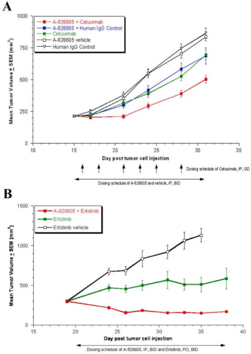 A, Efficacy of A-928605 and cetuximab, alone and in combination, in the MiaPaCa-2 pancreatic xenograft flank model. Beginning on day 16 post tumor cell injection, mice were dosed intraperitoneally with A-928605 at 37.5 mg/kg, b.i.d. for 20 days. Cetuximab and human IgG Control were dosed intraperitoneally at 30 mg/kg, once daily, 3×/week for a total of 6 doses. At the end of the dosing schedule, the %T/Cs (combination vs. vehicle and vs. human IgG control) were approximately 60 (P < 0.00001) and (combination vs. A-928605 + human IgG Control and vs. cetuximab) were approximately 72 (P < 0.05). B, Efficacy of A-928605 and erlotinib in combination in the HCC-827 NCSLC xenograft flank model. Beginning on day 20 post tumor cell injection, mice were dosed intraperitoneally with A-928605 at 37.5 mg/kg, b.i.d. for 16 days. Erlotinib was dosed orally at 3.1 mg/kg, b.i.d. for 16 days. At the end of the dosing schedule, the %T/Cs (combination vs. vehicle) was 17 (P < 0.00001) and (combination vs. erlotinib) was 27 (P < 0.005). In a separate arm of the study, A-928605 as a monotherapy was not consistently statistically different from its vehicle control (data not shown).