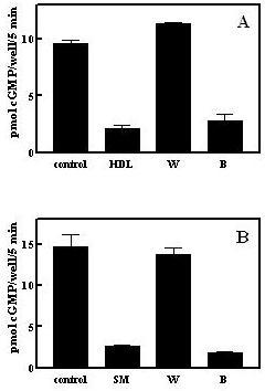 "Desensitization activity is extracted by butanol. A. Butanol extraction of human HDL. One mg human HDL protein was extracted with 33% n-butanol/20 mM acetic acid as described under Methods and desensitization activity in the upper (""B"") and lower (""W"") phases determined. HDL represents the starting material for the butanol extraction and was included with cells at 10 μg/ml. B. Butanol extraction of a partially purified serum preparation. Active fractions (about 4 ml) from the initial C18 column were dried and extracted with 33% n-butanol/20 mM acetic acid as described under Methods and diluted 1000-fold into the cell incubation for measurement of desensitization activity in the upper (""B"") and lower (""W"") phases. SM represents the pooled active C18 column fractions prior to butanol extraction diluted 1000-fold into the cell incubation."