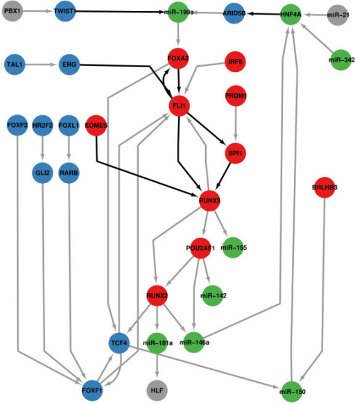 Core gene regulatory network. Different colors represent the different modules to which the nodes belong. The color for each module is the same as the color illustrated in Figure 3. Black edges represent the interactions are supported by experiments.
