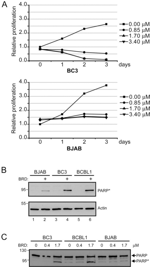Treatment of PEL cells with BRD 7389 decreases cell proliferation and increases PARP cleavage.A. Growth of BC3 PEL and BJAB B cell lines after treatment with the indicated doses of RSK inhibitor. B. Western blot comparing the levels of cleaved PARP in BJAB B cells and BC3 and BCBL1 PEL cells after treatment for 1 day with 0.85 µM RSK inhibitor. C. Western blot comparing the levels of cleaved (*) and uncleaved PARP in BJAB, BC3 and BCBL1 cells after treatment with 0.4 or 1.7 µM RSK inhibitor.