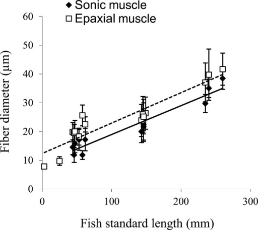 Fiber diameter (Mean ± SD) of sonic and epaxial muscles in Pygocentrus nattereri of different standard length. The black line represents the linear regression for sonic muscle and the dotted line represents the linear regression for the epaxial muscle. Note that epaxial muscle diameter of younger fish (3 and 25 mm) are on the same slope as sonic muscles.