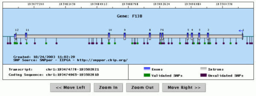 Graphical representation of a gene with the SNPs it contains. The picture shows the output of a Java applet displaying the gene structure (exons are in blue, introns in gray) and all SNPs in the same region (represented by dots or squares). The user may scroll or zoom the display using the supplied buttons, or recenter the display by clicking on the top portion of the picture. Clicking on a SNP opens a pop-up window containing information about it.