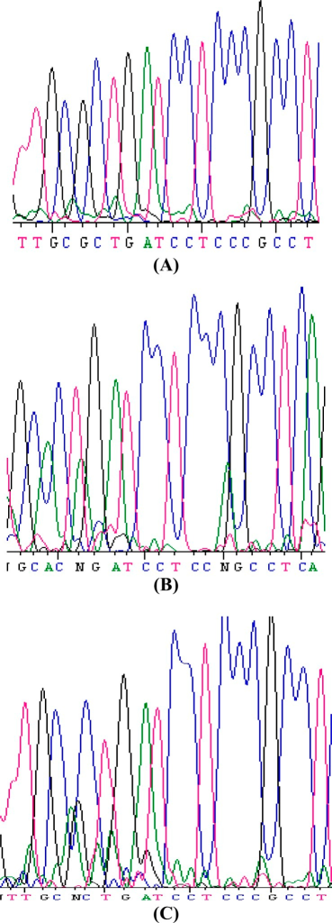 Sequencing results for each genotype variation. (A) Arg, (B) Gln, (C) Gln/Arg.