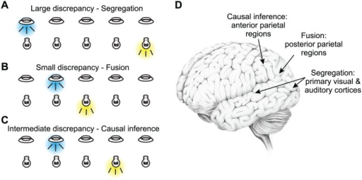 Causal inference about stimulus location.(A–C) Schematized spatial paradigm employed by several studies on audio-visual causal inference. Brief and simple visual (flashes) and auditory (noise bursts) stimuli are presented at varying locations along azimuth and varying degrees of discrepancy across trials. When stimuli are presented with large spatial discrepancy (panel A), they are typically perceived as independent events and are processed separately. When they are presented with no or little spatial discrepancy (panel B), they are typically perceived as originating from the same source and their spatial evidence is integrated (fused). Finally, when the spatial discrepancy is intermediate (panel C), causal inference can result in partial integration: the perceived locations of the two stimuli are pulled towards each other but do not converge. Please note that the probability distributions corresponding to each panel are shown in the respective panels in Fig. 1. (D) Schematized summary of the results by Rohe and Noppeney. Early sensory areas mostly reflect the unisensory evidence corresponding to segregated representations, posterior parietal regions reflect the fused spatial estimate, and more anterior parietal regions reflect the overall causal inference estimate. This distributed pattern of sensory representations demonstrates the progression of causal inference computations along the cortical hierarchy.