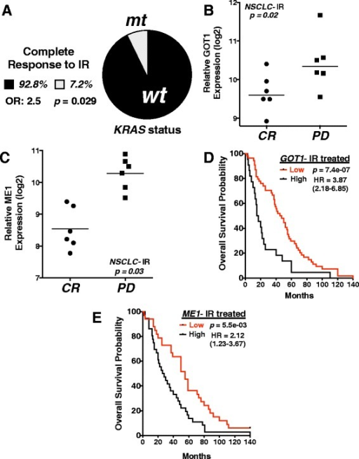 GOT1 and ME1 expression predicts response to radiation therapy in NSCLC patients. a Percent of complete responders to ionizing radiation (IR) in NSCLC patients separated based on KRAS status. Total number of complete responders in TCGA database = 14; wild-type KRAS = 13, mutant KRAS responders = 1. OR = odds ratio. Results compared using Fisher's exact test. b, cME1 and GOT1 log2 mRNA expression levels with calculated mean from TCGA NSCLC patients prior to radiation treatment with associated patient outcome after radiation treatment, CR = complete response, disappearance of all target lesions; PD = progressive disease, >20 % increase in the sum of the longest diameter of target lesions. Multiple probes integrated for each gene. d, e Kaplan-Meier overall survival curves in IR-treated NSCLC patients from KMPLOT database separated into high and low GOT1 and ME1 expression. Total number of NSCLC patients analyzed = 73; number of patients with high expression: ME1 = 40, GOT1 = 45; number of patients with low expression: ME1 = 33, GOT1 = 28. All results were compared using Student's t-tests or a Cox regression analysis unless otherwise stated. *p < 0.05; **p < 0.01; ***p < .001