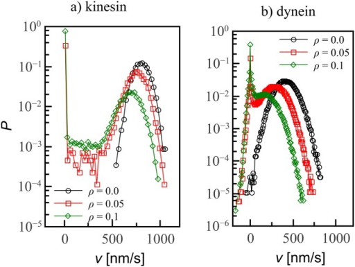 Velocity distributions are normal on undecorated tracks but develop a peak around v = 0 as decoration fraction ρ is increased.A: Kinesin, whose velocity can only be positive. B: For dynein, the distribution includes also negative velocities. Lines are guides to the eye; errorbars are smaller than the symbol size.