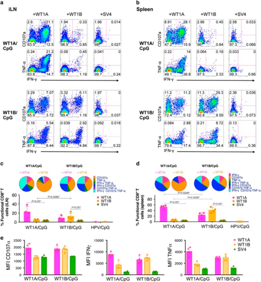 Polyfunctional WT1A-specific CD8+ T cells induced following WT1A- or WT1B vaccination. In one experiment, cells isolated from iLN and spleen were stimulated with WT1A, WT1B or the SV4 control peptide in a 6-h intracellular cytokine staining (ICS)-CD107a assay to measure IFN-γ, TNF-α and CD107a responses following vaccination. Representative functional profiles from individual mice in the WT1A/CpG (n=4) or WT1B/CpG (n=4) are shown for iLN (a) and spleen (b) as a percentage of CD8+ T cells. Polyfunctionality was assessed using Boolean gate analysis to determine the proportion of functional CD8+ T cells expressing 1, 2 or 3 of the functional markers in iLN (c) and spleen (d). Bar graphs below the pie charts show the percentages (mean±s.d.) of total functional cells based on the CD8+ T-cell population. Each bar graph dot point represents individual mice, except for dot points in the iLN HPV/CpG group (c), which represent WT1A and WT1B peptide responses from pooled mice (n=3). (e) Mean fluorescence intensity (MFI, geometric mean) of functionally positive CD8+ T cells (that is, CD107a+, IFN-γ+ or TNF-α+) of iLN are shown.