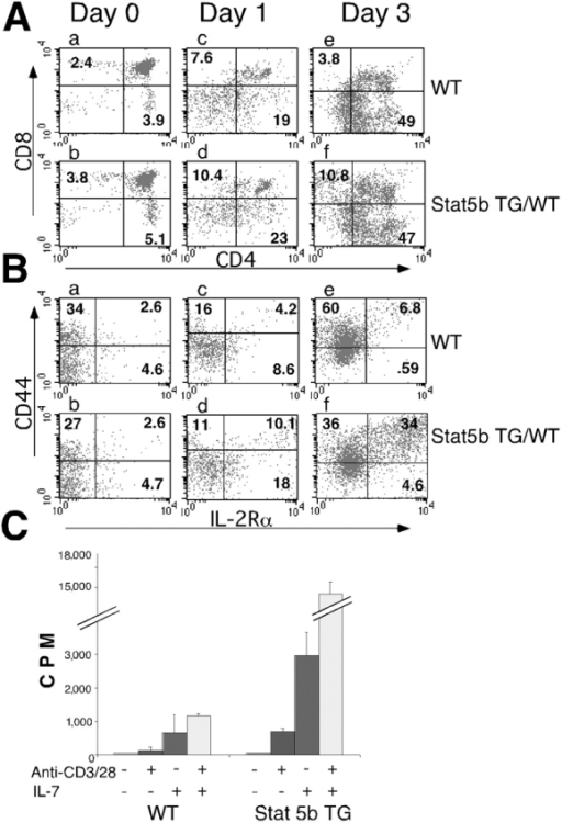 Effect of the Stat5b and TCR transgenes on CD4/CD8 flow cytometric profiles, activation state, and proliferative potential of thymocytes. (A) CD4/CD8 profiles for wild type vs. Stat5b transgenic thymocytes. CD4+/CD8+ (DP) thymocytes (day 0) were cultured with PMA + ionomycin for 24 h (day 1) followed by 48 h in RPMI (day 3 cells; reference 19). Similar results were obtained if anti-TCRβ (H57–597) + anti-CD2 (RM2–5) was used instead of PMA + ionomycin. (B) CD44/IL-2Rα profiles (gated on total population) for the same cells as in A. (C) Stat5b transgenic thymocytes exhibit augmented proliferation to IL-7, to anti-CD3 + anti-CD28, or to both stimuli.