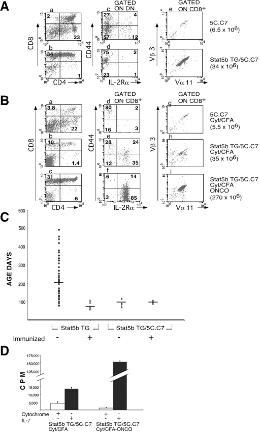 Stat5 transgenic mice are more prone to malignant transformation in the presence of a TCR transgene. (A) Mice that were heterozygous for the Stat5b and 5CC7 TCR transgenes (b and d) exhibited an increase in activated CD8+ T cells as compared with mice only carrying the 5CC7 transgene (a and c). CD4/CD8 (a and b), CD44/IL-2Rα (gated on CD4−/CD8− [DN], c and d), and Vβ3/Vα11 (e and f) profiles of mice that were heterozygous for the 5C.C7 TCR transgene and RAG2 (panels a, c, and e) and also for the Stat5b transgene (panels b, d, and f) are shown. (B) 5C.C7 TCR transgenic mice (panels a and d) and 5C.C7 TCR/Stat5b transgenic mice (panels b, c, e, and f) were immunized intraperitoneally with cytochrome c/CFA, and CD4/CD8 (panels a, b, and c) and CD44/IL-2Rα (gated on CD8+, panels d, e, and f) profiles were analyzed upon sacrifice 3 wk later. The mouse represented by panels b, e, and h had no evidence of lymphoma whereas the mouse represented by panels c, f, and i had an enlarged thymus consistent with lymphoblastic lymphoma. In A and B, total thymocyte numbers are shown in parentheses on the far right. (C) Age of diagnosis of lymphomas. Shown are Stat5b transgenic mice, not immunized or immunized with ovalbumin/CFA, and Stat5b/5C.C7 double transgenic mice that were either not immunized or immunized with cytochrome c/CFA. Each point represents a single mouse, and the median for each group is indicated by the horizontal bar. (D) Proliferation of thymocytes from mice that were heterozygous for both the Stat5b and 5CC7 TCR transgenes, with and without lymphoma, after incubation with cytochrome c (200 μg/ml) or 1 nM IL-7 for 72 h.
