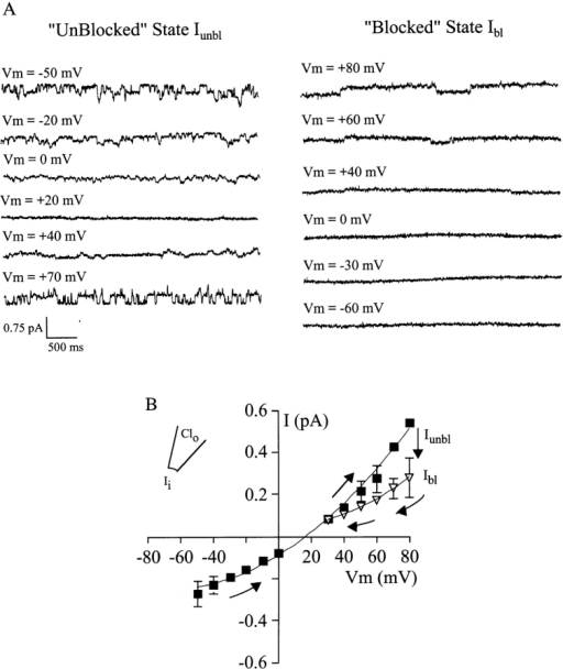 Hysteresis of the current–voltage relationship with intracellular iodide solution. (A, left) Traces recorded at different  holding potentials in the sequence are indicated; i.e., starting at  negative potentials where currents would initially be carried by iodide. (right) Traces obtained from the same patch after the switch  to low I− permeability. Note that current amplitudes decreased by  ∼40% at +80 mV, and iodide currents could no longer be measured at negative potentials. (B) Mean current–voltage relationship obtained under biionic conditions with internal iodide (mean  ± SEM, n = 6). Arrows indicate the protocol. Squares represent  initial currents in the Iunbl state, when the mean reversal potential  indicated PI/PCl = 2.1. Inverted triangles show the currents measured after channels switched to low I− permeability (Ibl state). Positive currents, which would be carried by external I− ions, could no  longer be measured under these conditions. The extrapolated reversal potential under these conditions indicated PI << PCl.