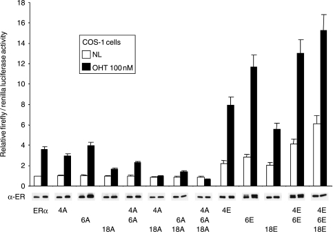 Effect of individual site mutations on ERα activity. COS-1 cells were co-transfected with ERE-3-TATA-luc, pRL-TK, and the wild-type ERα expression vector (ERα) or versions with alanine or glutamic acid substitutions, as indicated. Cells were treated and luciferase assays carried out as for Fig. 4. A parallel transfection series was assayed for ERα expression by immunoblot (α-ER).
