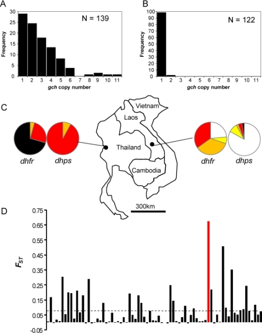 Geographical differentiation of the gch1 CNP.The frequency of chromosomes carrying different gch1 copy number is plotted in Thailand (a) and Laos (b). (c) Map showing sampling locations in Thailand and Laos. The pie charts show the representation of alleles present at known genes involved in antifolate resistance, and provides a molecular indicator of the strength of antifolate selection on these two populations. White-wild type, yellow-1 mutation, orange-2 mutations, red-3 mutations, black-4 mutations. See table S5 for details of the alleles present. (d) The distribution of FST for gch1 CNP and for 73 polymorphic sSNPs. The markers are plotted by position across the genome. The mean FST for sSNPs is marked by the dotted line.