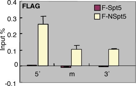 NSpt5 directly interacts with the hsp70-4 chromatin in vivo.Charts show the percent of input material immunoprecipitated in different regions of hsp70-4 chromatin. The relative enrichment of ChIP and qRT-PCR values obtained with Flag antibody over the IgG control. Error bars represent S.E.M. of duplicate measurements from two independent experiments.
