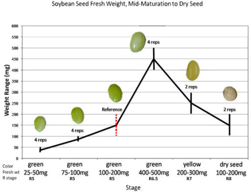 The gallery for --> Soybean Growth Stages Timeline Quailman And Patty Mayonnaise