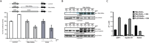 Effect of SSi on PML/RARα-mediated Wnt signaling pathway activation.(A) Transactivation assay for Wnt-signaling-related TCF/LEF-dependent transcription. Indicated expression vectors were co-transfected with either Topflash (OT) or Fopflash (OF) (the pGL3-OT promoter contains three TCF/LEF binding sites, whereas pGL3-OF contains mutated inactive binding sites and is a negative control) reporter constructs into 293 cells and exposed them to either 100 µM SSi or 0.02% DMSO. After 48 h, luciferase activity was measured and normalized to co-transfected Renilla activity. (B) Western blots for the expression of PML/RARα and S33A using the indicated antibodies, α-β-actin-loading control. (C) Effects of SSi on Wnt target genes in X-RARα-positive Sca1+/lin- HPCs. Results are represented as 2-ΔΔCT values. Each experiment was performed three times in triplicate, with similar results obtained each time. One representative experiment with SD is shown.