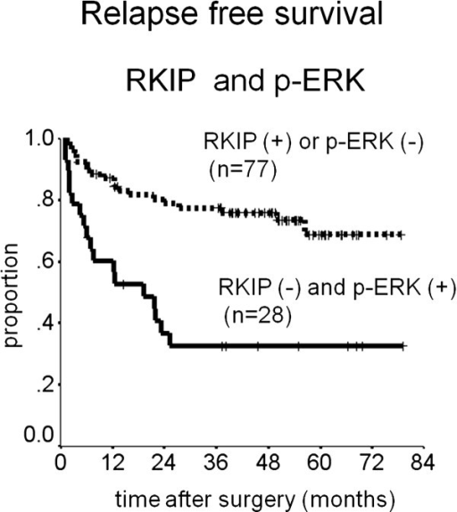 Kaplan-Meier curves for the relapse-free survival of patients with expression of RKIP and p-ERK.