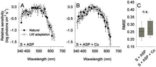 HC-cone feedback does not affect the efficiency of color induction in the photoresponse of cones.(A,B) Spectral sensitivity of the photoresponse of cones measured from retina treated with saline and aspartate (S + ASP), and from retina treated with saline, aspartate and cobalt (S + ASP + Co). A sensitivity peak in the ultraviolet region (ca. 370 nm) in the S+ASP-treated retina disappeared following the application of cobalt. Error bars, ±1 SEM. Sample size: S + ASP: Natural = 5, LW adaptation = 5; S + ASP + Co: Natural = 5, LW adaptation = 4. (C) The efficiency of color induction, as indicated by the root mean square error (RMSE) between the spectral sensitivity under the two backgrounds, did not vary significantly with the application of cobalt that inhibits HC-cone feedback (denoted n.s.; see text for statistics). Box: mean (dashed), median (solid), 25th and 75th percentiles; whiskers: 10th and 90th percentiles.