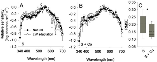 HC-cone feedback increases the efficiency of color induction in the output of cones.(A,B) Spectral sensitivity of the output of cones measured from saline-treated retina (S) and retina treated with saline and cobalt (S + Co). Error bars, ±1 SEM. Sample size: S: Natural = 5, LW adaptation = 5; S + Co: Natural = 4, LW adaptation = 5. (C) The efficiency of color induction, as indicated by the RMSE between the spectral sensitivity under the two backgrounds, decreased significantly with the application of cobalt (marked with an asterisk; see text for statistics). Box specifications as in Figure 3.