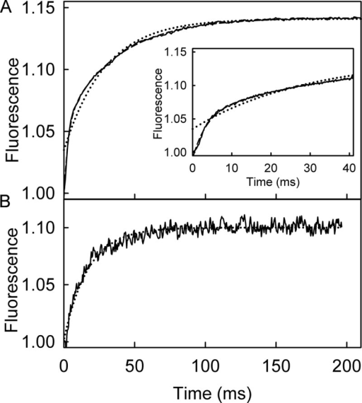 Mant fluorescent changes upon binding RecD2·dT20.A, shown is the time course of mant fluorescence upon mixing 2.5 μm mantATPγS and 12.5 μm RecD2·dT20. The inset shows the initial increase in fluorescence. The long time traces were fitted to double exponentials (Equation 2, dashed line) giving observed rate constants of 256 ± 8 and 27.4 ± 2.3 s−1. The single exponential fit is shown for comparison (dotted line). B, shown is the time course of mant fluorescence upon mixing 2.5 μm mantATP and 12.5 μm RecD2 with 15 μm dT20 after a first mixing of 25 μm RecD2 and 5 μm mantATP and aging for 0.1 s. The trace was fitted by a single exponential (Equation 1, dotted line) giving a rate constant of 48.2 ± 4.5 s−1. If the second mix was with buffer alone (no DNA), there was a small change in fluorescence, which increase linearly over a long time (not shown). This probably represents a basal level of activity.