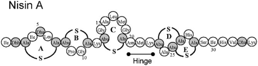 Structure of nisin A. Modified residues are in grey. Ala‐S‐Ala, Lanthionine; Abu‐S‐Ala, β‐methyllanthionine; Dha, dehydroalanine; Dhb, dehydrobutyrine. (β‐methyl)lanthionine rings are labelled A–E. The location of the hinge region, consisting of Asn‐Met‐Lys, is also indicated.