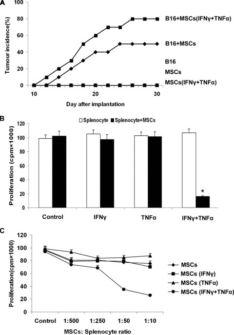 The rejection from Balb/c mice on B16 melanoma cells are reduced by the MSCs treated with proinflammatory cytokines. (A) Balb/c MSCs (1 × 106) were pretreated with inflammatory cytokines IFN-γ and TNF-α (20 ng/ml each) for 12 hrs and then mixed with B16 melanoma cells (5 × 106) to perform subcutaneous administration in the Balb/c mice armpit area. Tumour incidence was observed to evaluate the immunosuppressive function of MSCs that assisted the B16 melanoma cells from escaping the immunological rejection of Balb/c mice. As negative controls, B16 cells or MSCs alone were injected in Balb/c mice. (B) C57BL/6 MSCs were pretreated with inflammatory cytokines IFN-γ and TNF-α (20 ng/ml each) for 12 hrs. Fresh C57BL/6 splenocytes were activated by ConA (5 μg/ml) for 72 hrs and IL-2 (20 ng/ml) was added for proliferation. MSCs were cocultured in a 96-well with splenocytes (1 × 105/well) plate at a 1:10 ratio and cell proliferation was assessed 72 hrs later by 3H-Tdr incorporation. (C) MSCs were mixed with splenocytes (1 × 105/well) at different ratios (1:500, 1:250, 1:50, 1:10), and the proliferation was assessed 72 hrs later (*P < 0.05).