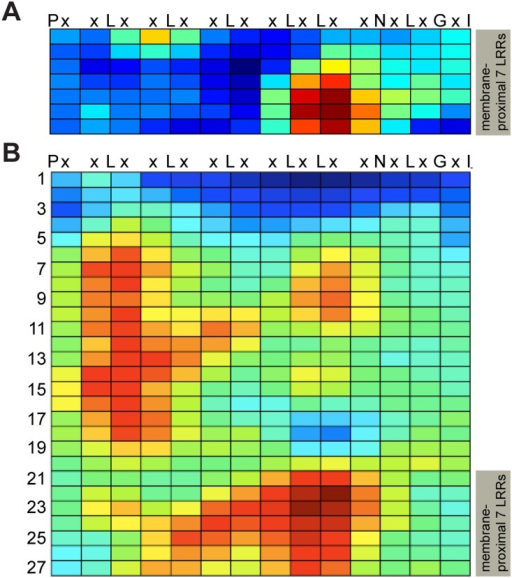 "Repeat Conservation Mapping reveals conserved region near C-terminus of LRR domains of FLS2, EFR, BRI1 and PEPR1.Each row represents one leucine-rich repeat (LRR) and each square represents one solvent-exposed ""x"" amino acid position (as per LRR consensus sequence shown at the top). Conservation score at each amino acid position is center-weighted score for the cluster of 15, 20 or 25 predicted solvent-exposed LRR amino acids surrounding that site; blue: least conserved, red: most conserved. For FLS2, the seven rows of (A) are the same repeats (same residues) as rows 21–27 of (B). (A) Conservation map generated by comparing the most C-terminal seven repeats of the LRR sequences of the BAK1 interacting proteins FLS2, EFR, BRI1 and PEPR1. (B) Conservation map generated by comparing the entire FLS2 LRR domain sequences from eleven non-Brassicaceae plant species."